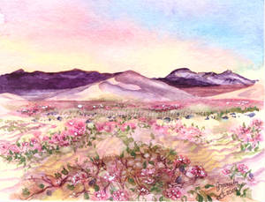 Even The Desert Can Bloom in Spring