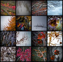 Winter in Color. by alyciacreative