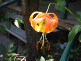 Sun in the flower by pereplekino
