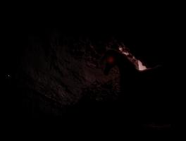creatures lie here.. by midnitejinx