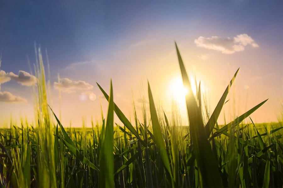 Fields before Sunset