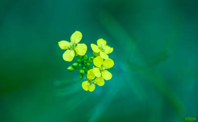 Glow in the Green by IHEA