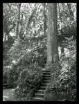 hiden path