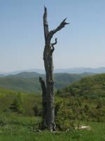 dead tree by LuckyStock