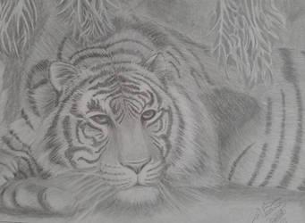 Tigre by VeronicaRomero