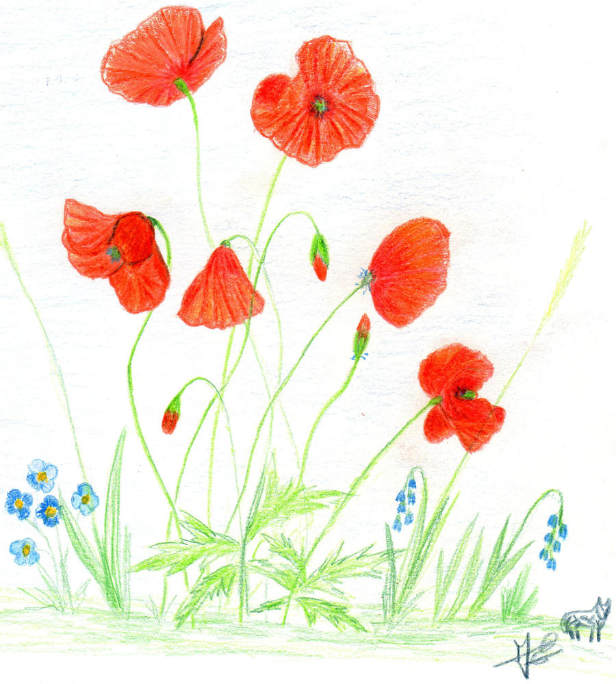 un p'tit coquelicot .... by angeloup