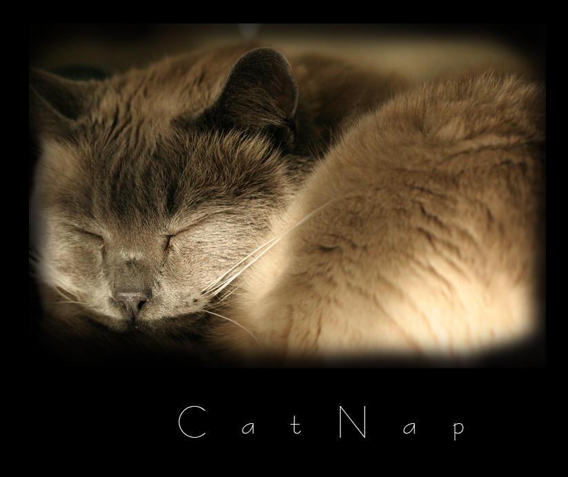 CatNap by pencillicious
