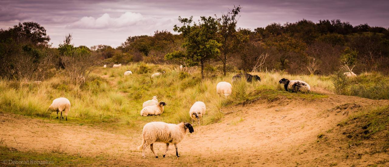 Sheepville by DeborahBeeuwkes