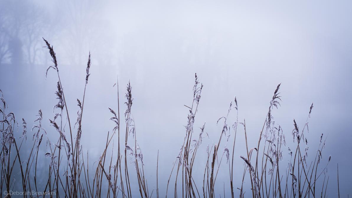 Winter's grasp by DeborahBeeuwkes