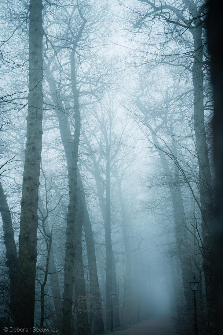 Provocative Trees by DeborahBeeuwkes