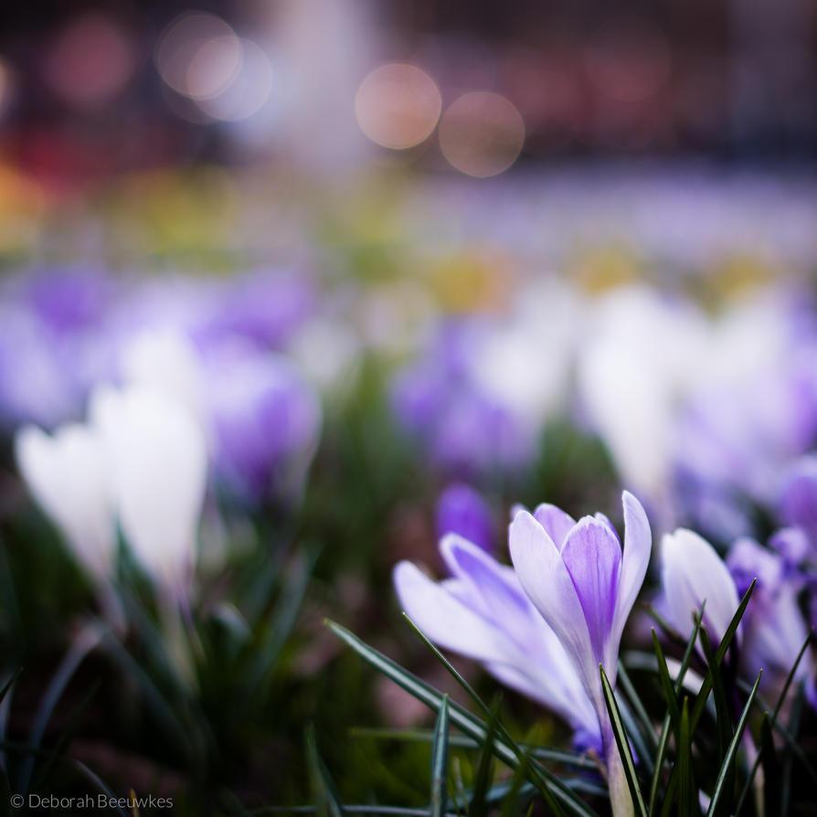 Flowering Life by DeborahBeeuwkes