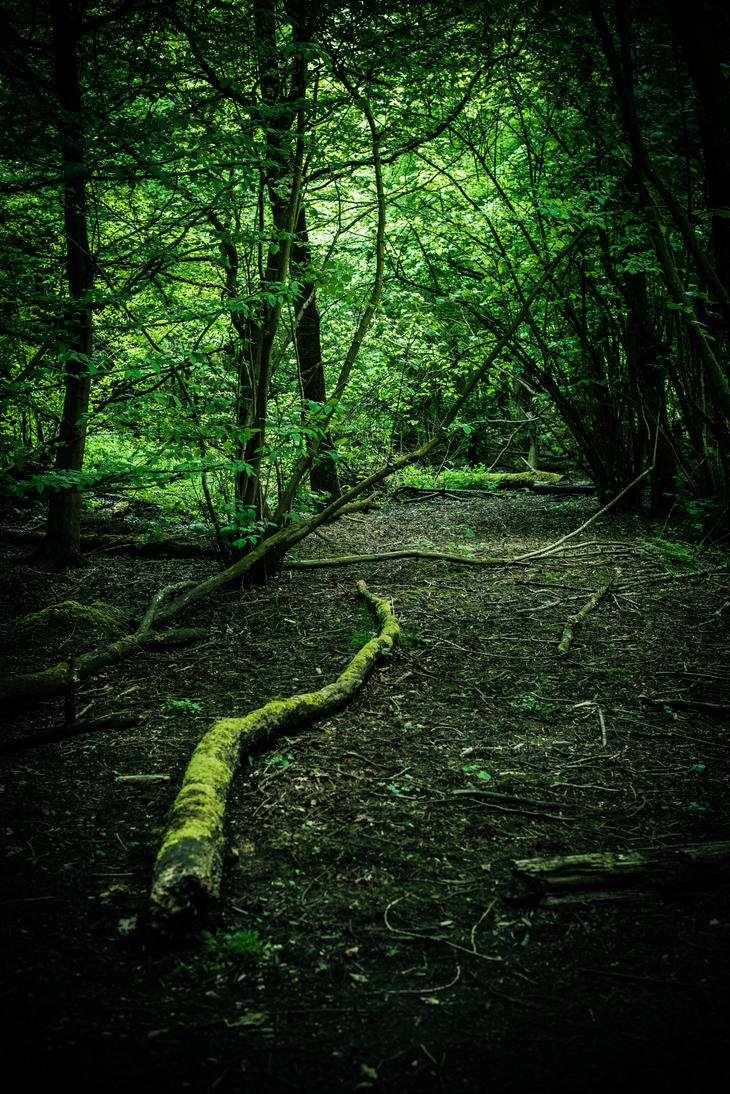 Woods by DeborahBeeuwkes