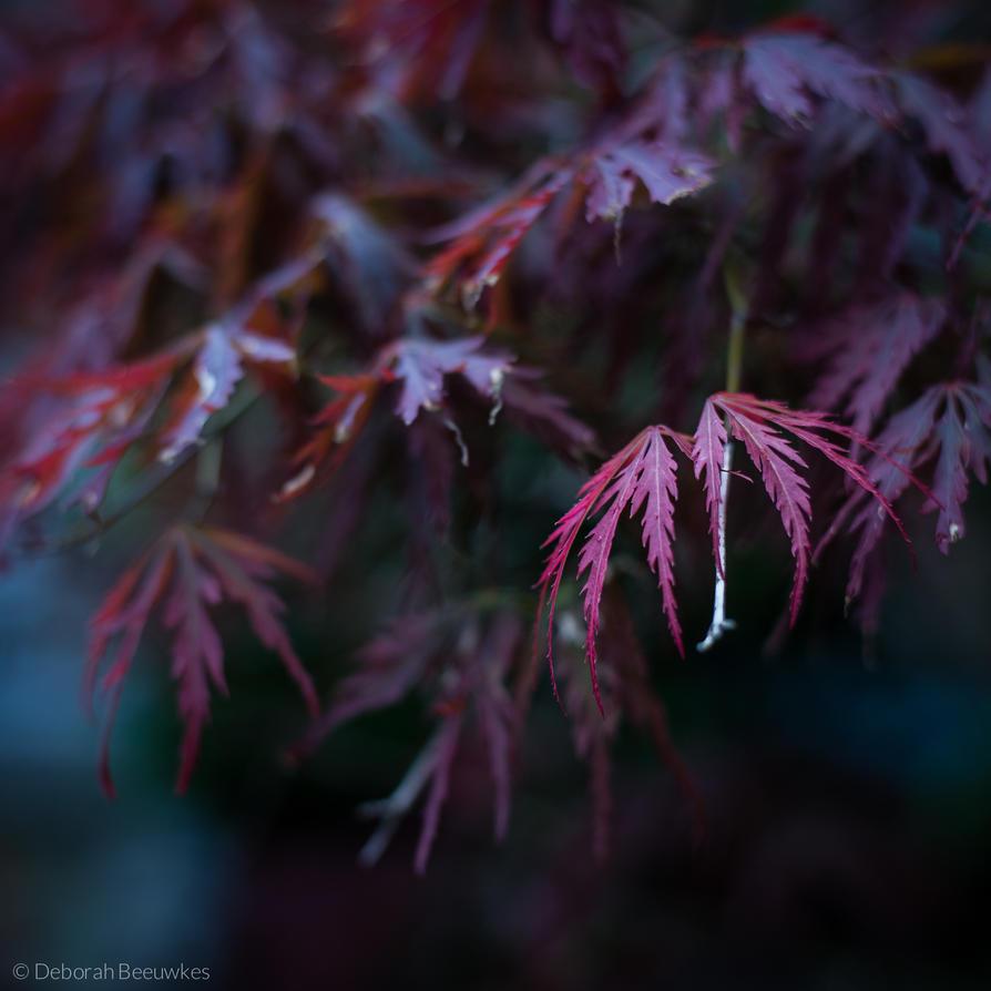 Fiery leaves by DeborahBeeuwkes