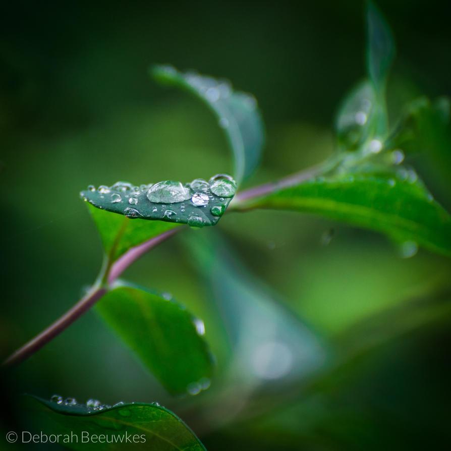 Summer Rain II by DeborahBeeuwkes