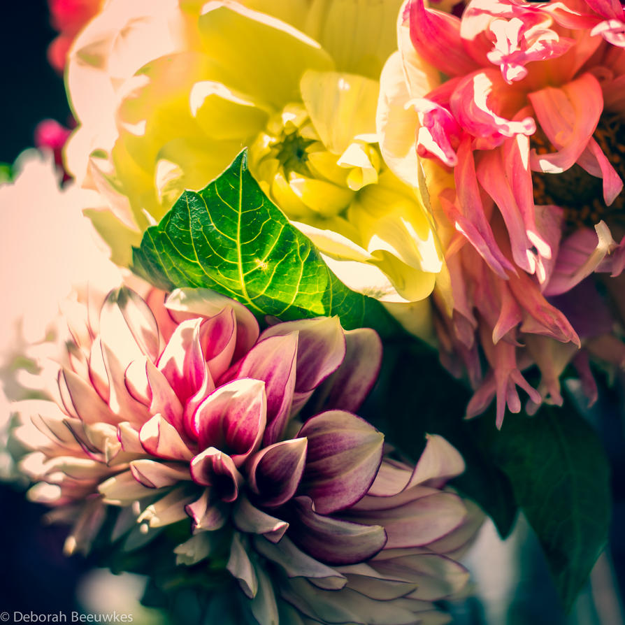Vintage Colours by DeborahBeeuwkes