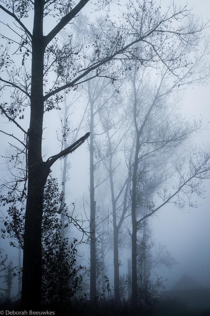 Cascade by DeborahBeeuwkes