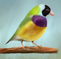 Procreate bird