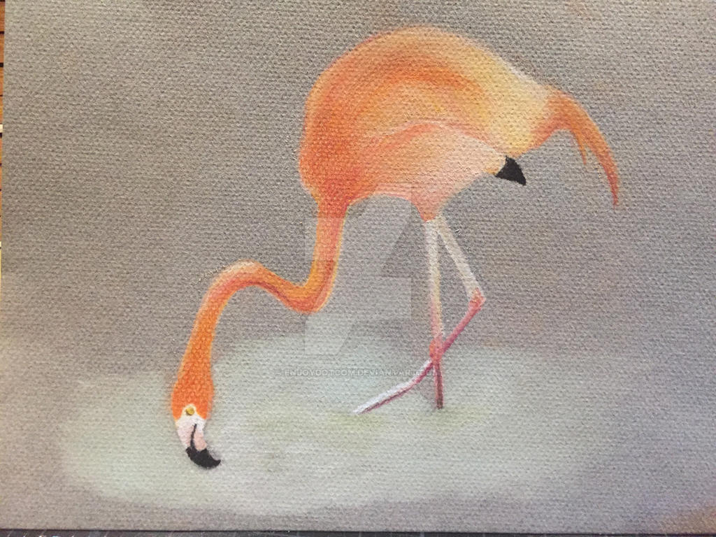 Flamingo by Enjoydotcom