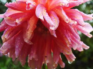 Wet Pink 2