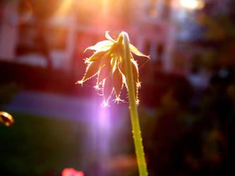 Wonderful Morning by DorottyaS