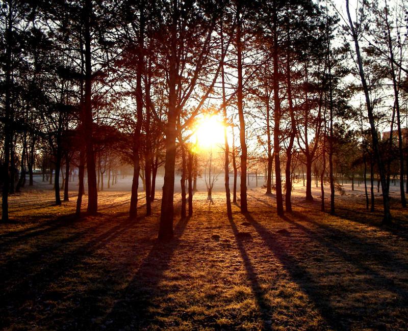 Image Gallery Sunrise Trees