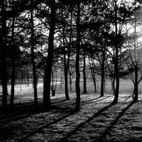Sunrise between the trees bw by DorottyaS