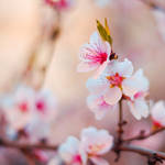 A little bit of Spring