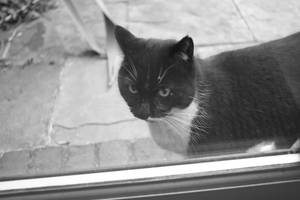 Black and White cat by 69ingChipmunkzz