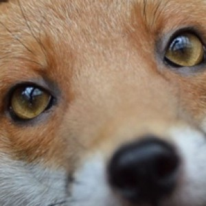 FoxyRosePosie's Profile Picture