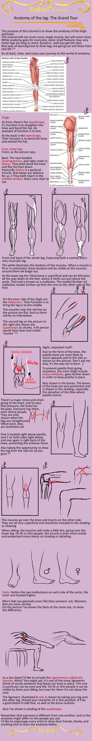 Anatomy of the leg: grand tour by Zedna7