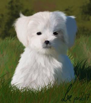 practice puppy