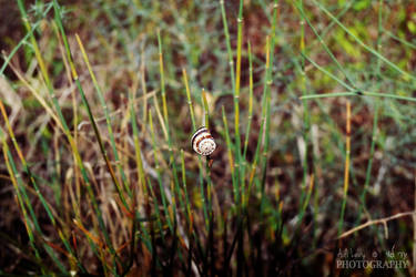 Snail by Adida007