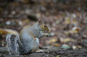 SQUIRREL by major-holdups