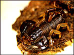 Skorpion... Wins by ScaledOne