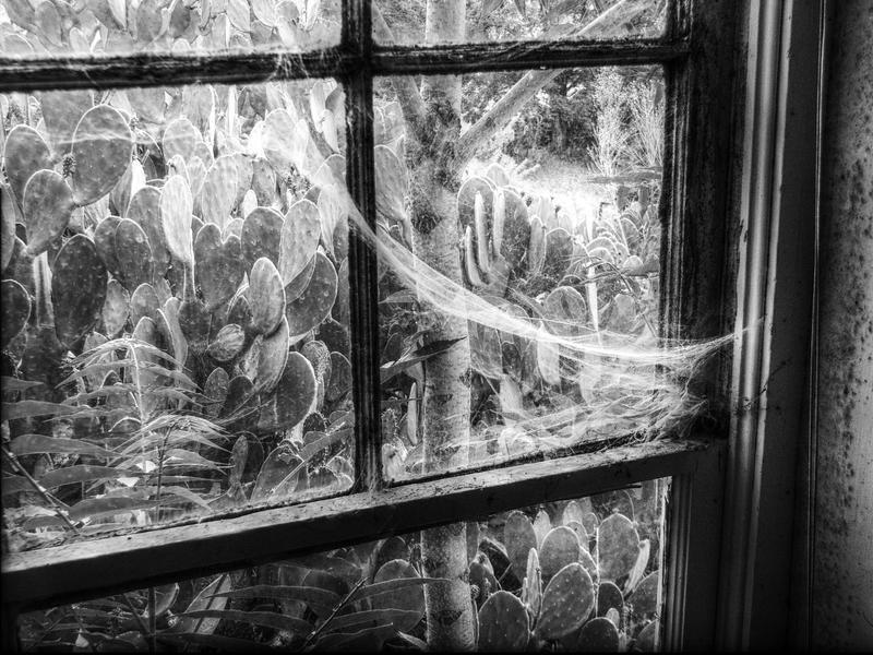 Variation on a Window II by dozalt