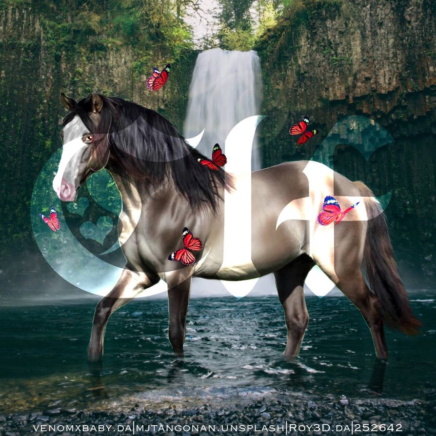 Homes4horses Horse Avi Watermark