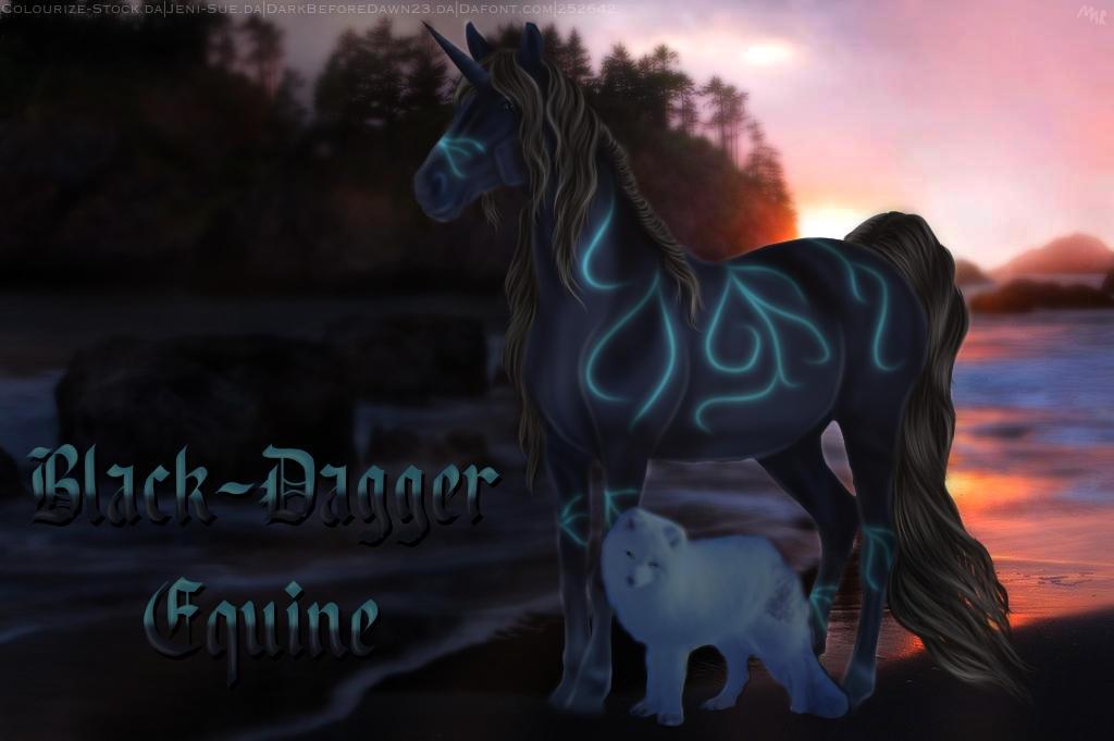 Black Dagger Equine Bio Image