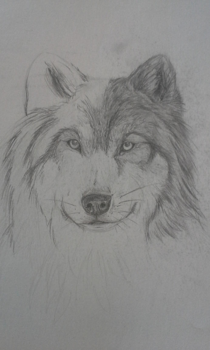 Wolf WIP by Kantata98