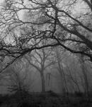 Steinmen Woods