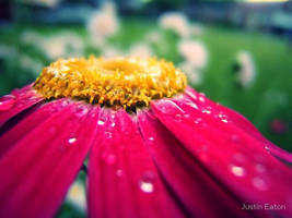 Morning Dew by justineaton