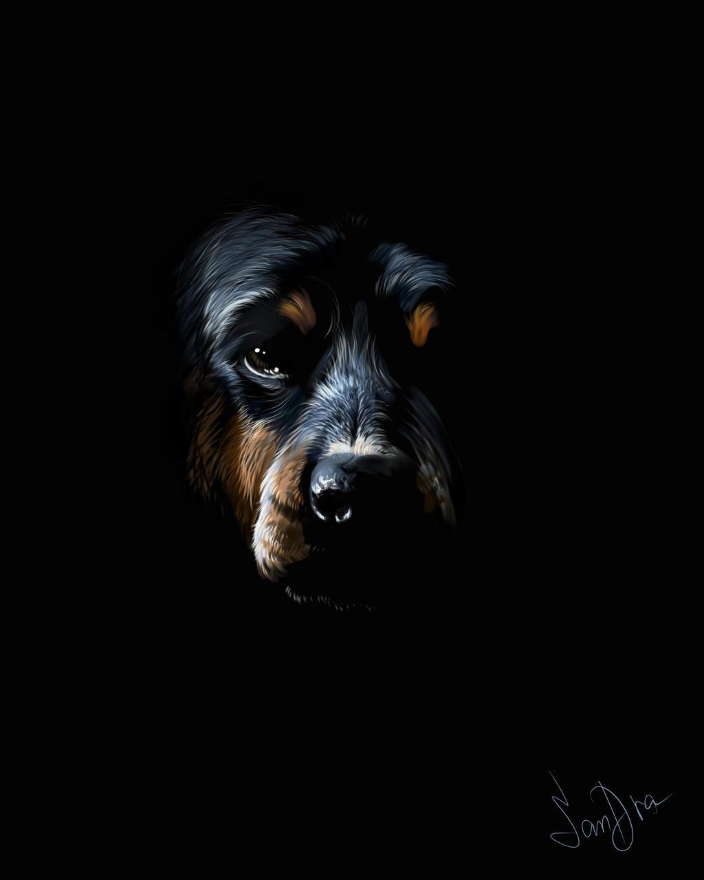 Rottweiler Wallpaper: Rottweiler In Darkness By SalamanDra-S On DeviantArt