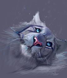Tiger sketch by SalamanDra-S