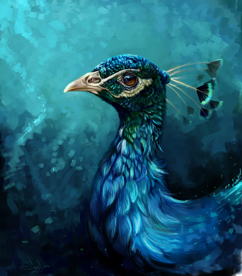 Peacock by SalamanDra-S