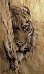 Tiger looks at you by SalamanDra-S
