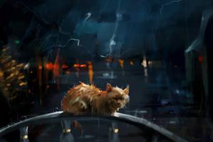 Abandoned cat by SalamanDra-S