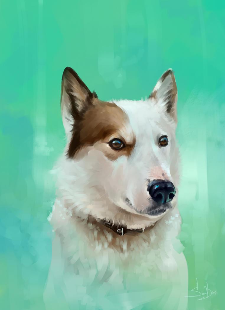 Dog5 2017 by SalamanDra-S