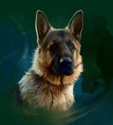 dog by SalamanDra-S