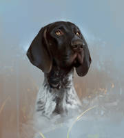 Shorthaired pointer by SalamanDra-S