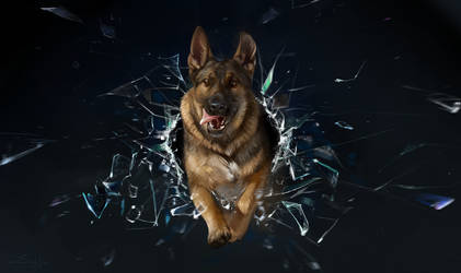 Dog and shards by SalamanDra-S