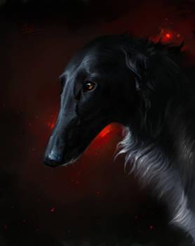Black dog on red background